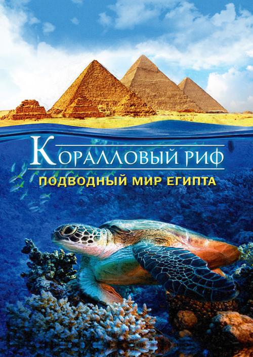 Коралловый риф: Подводный мир Египта