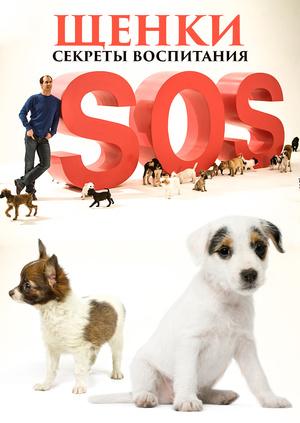 Секреты воспитания идеальной собаки